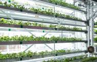 TPP Capital launches $20m urban agriculture investment fund