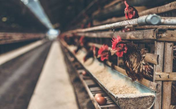 Food companies call on EU to phase out caged hens