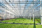 Gotham Greens inaugurates new urban greenhouse in California