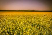 Cargill to build new $350m canola processing plant in Canada