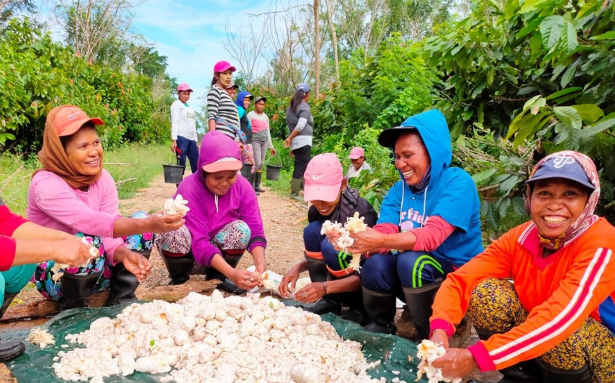 Mondelēz and Olam join forces to create sustainable cocoa farm in Indonesia