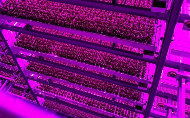 Vertical farming firm 80 Acres Farms enters into research agreement