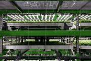 Vertical farming company Bowery Farming secures $300m in funding