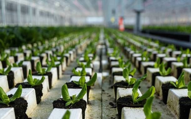 Revol Greens to construct 40-acre greenhouse in Texas