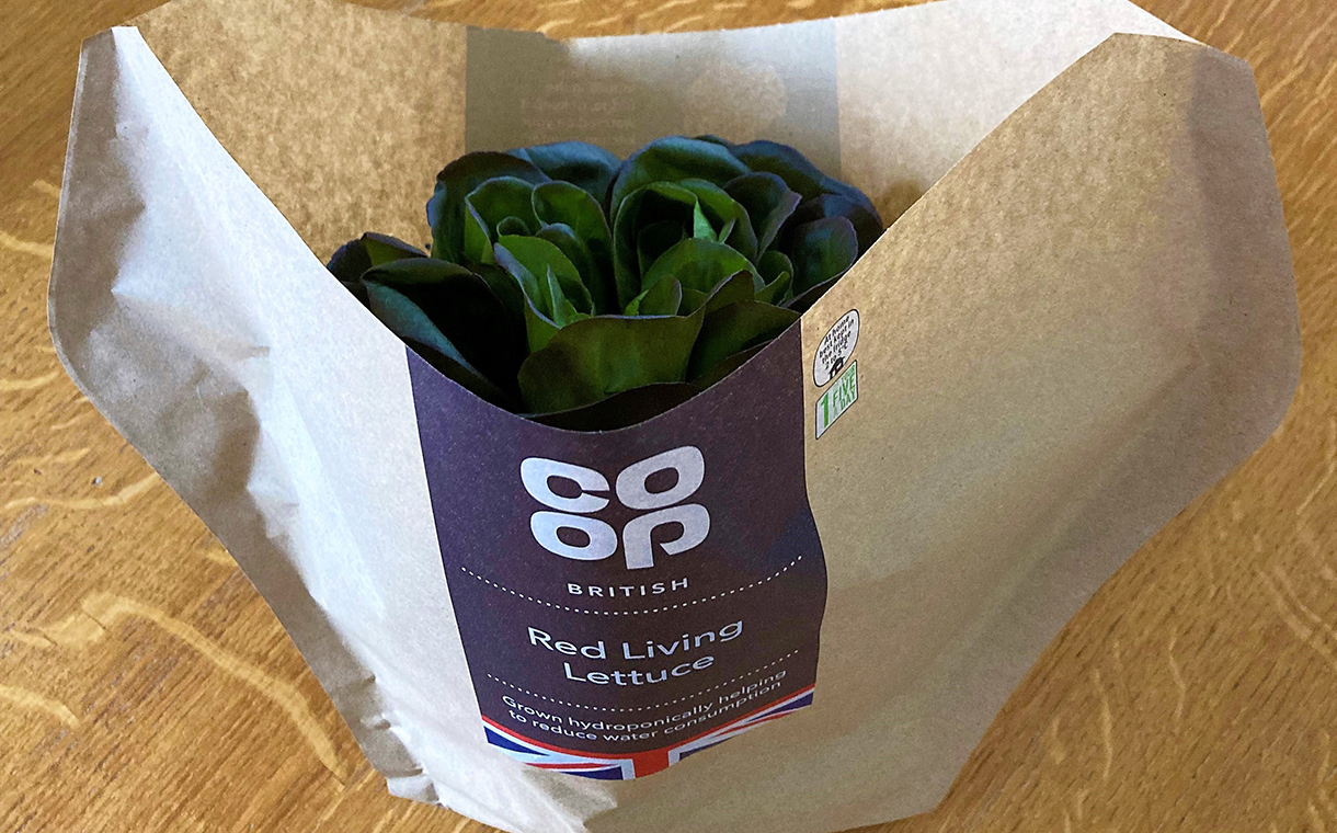 JEPCO introduces hydroponically grown lettuce in UK Co-op stores