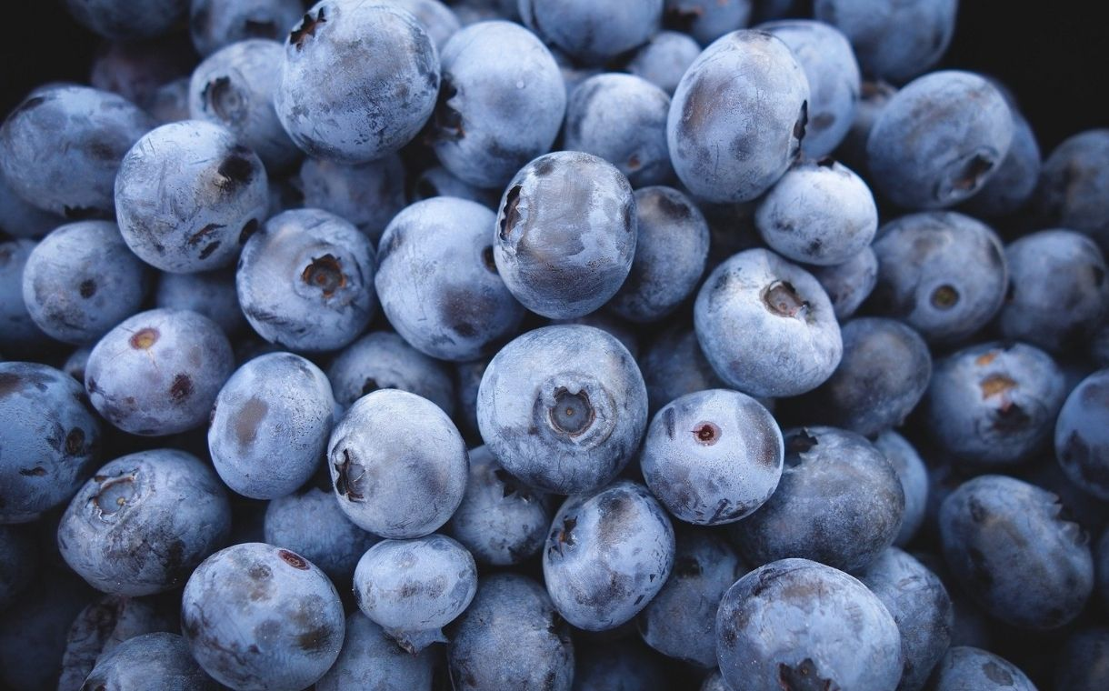 Wyman's expands wild blueberry supply through acquisition