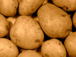 Potato is the safest food in Britain